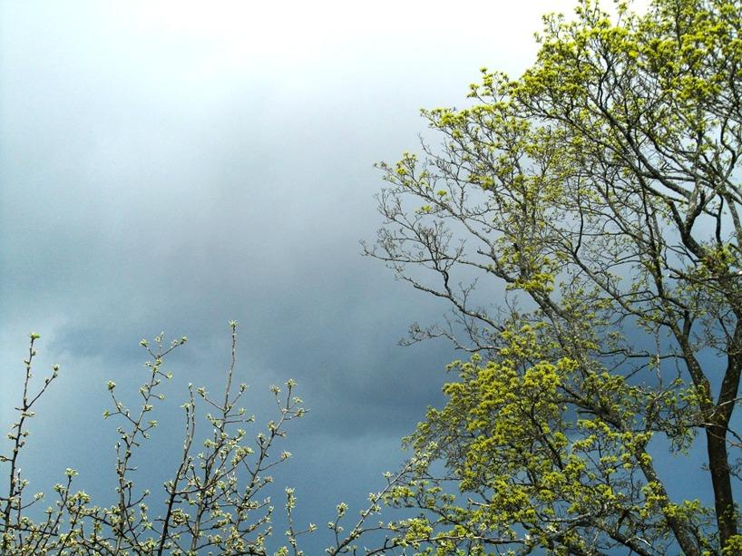 Mörk himmel och krispiga trädtoppar