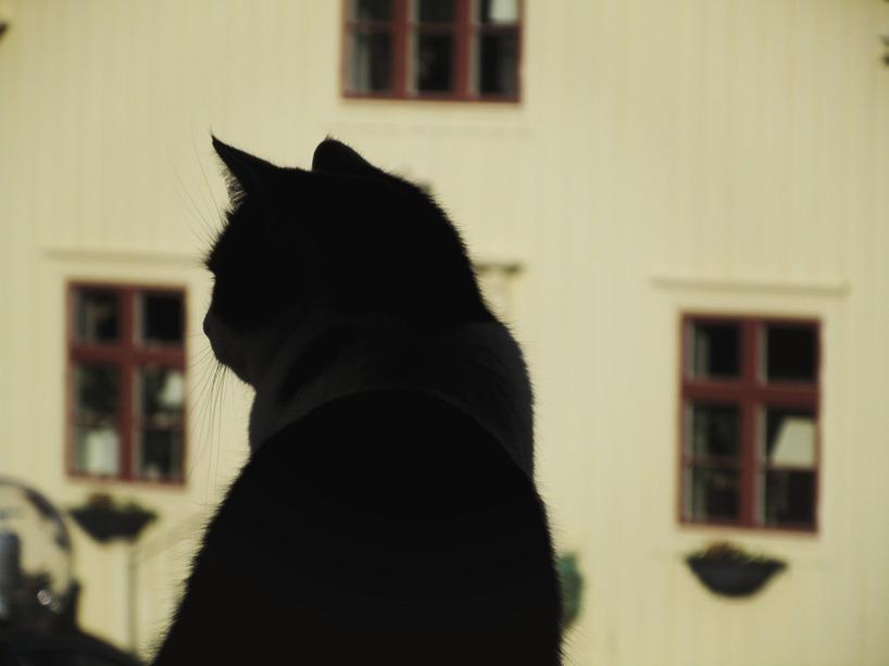 Olivia spanar