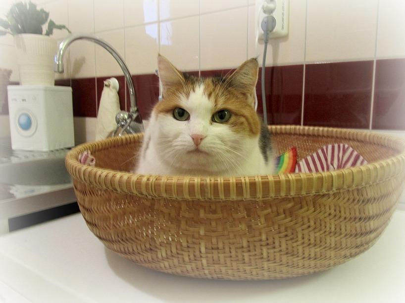 Olivia i korgen på tvättmasinen