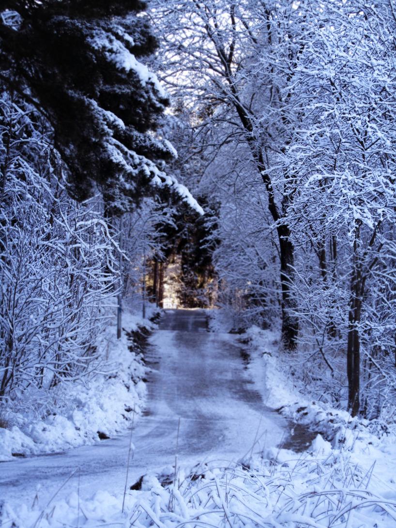 Foto/ Vinterblå cykelväg