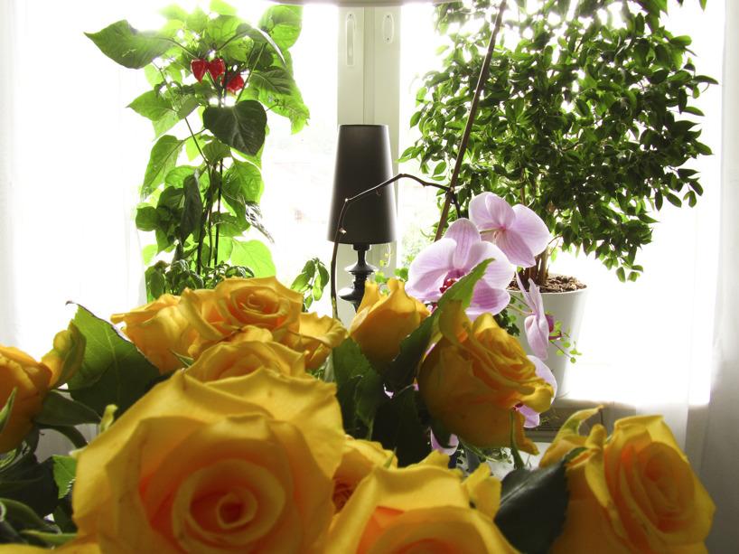 Fullt av växter i köket