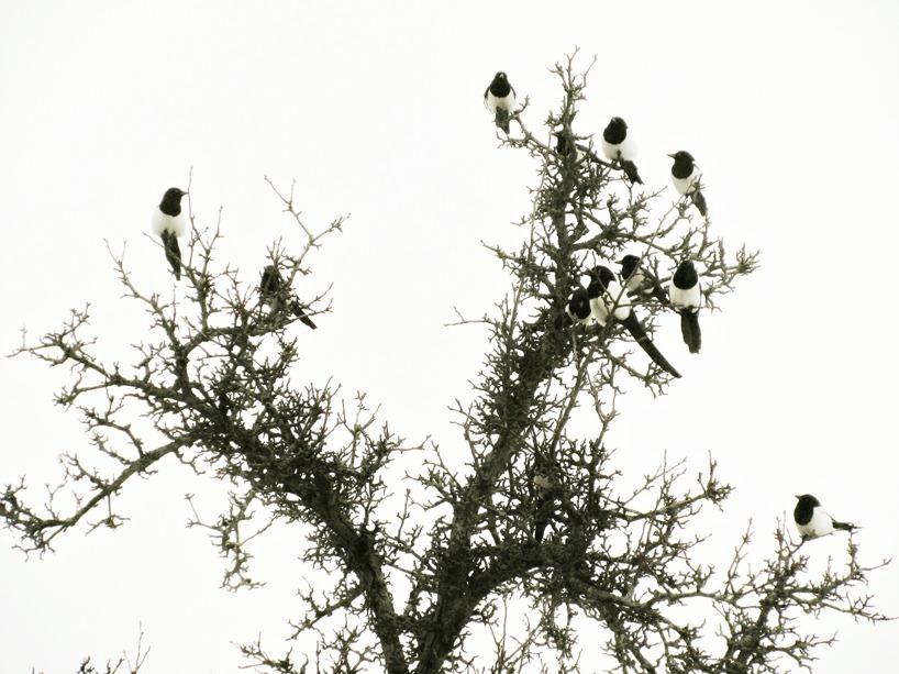 """""""min familj"""" skator i trädet utanför"""
