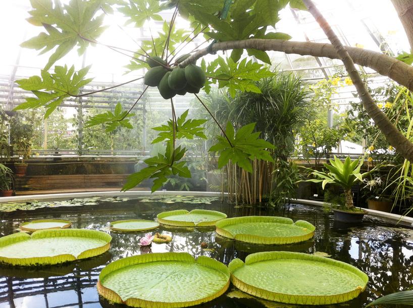 Tropiska växter, Botaniska trädgården, Uppsala