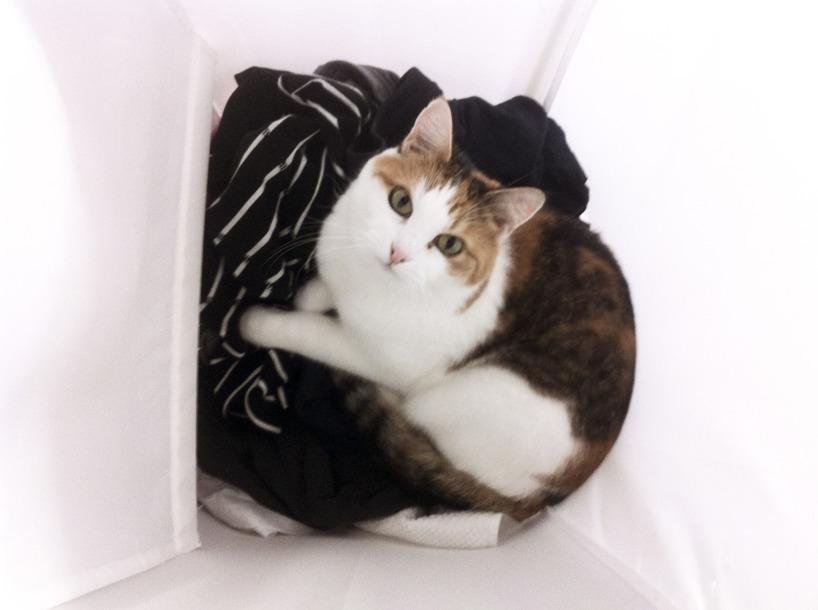 Olivia i tvättkorgen