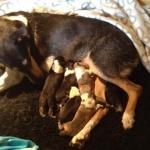 Nyfödda 3
