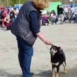 Dogshow in Piteå 2013