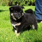 Barro puppyhood
