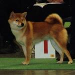 ckholm Dogshow 2013