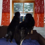 2012-10-14_1-guarding-from-cottage-wit