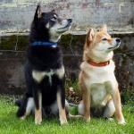 Barro och Roxy maj 2015