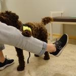 Stella tränar matte i grovmotorik