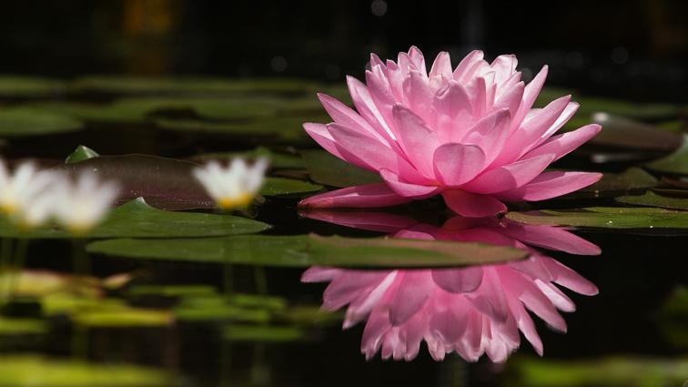 sex och por lotus thaimassage