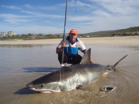 Olovligt sportfiske av vithaj i Sydafrika. Vithajen är en skyddad art i Sydafrika sedan 1991.