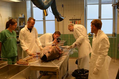 Från vänster, Annika Strömberg, Bo Delling, David Bernvi, Erik Åhlander och Peter Nilsson. Bild: Sven O. Kullander.