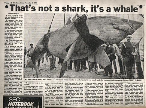 Denna vithaj fångades 1987 av hajfiskaren Vic Hislop vid Phillip Island, i Victoria, Australien och sägs vara omkring 6 meter lång och väga över 2 ton.