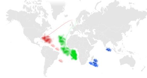Studien visar att det finns två genetiska populationer i Atlanten. Den västliga populationen har minskat med 98,9%. En yttraligare population noterades i Indiska Oceanen. Inga prover togs från Röda havet. Bilden visar två hypotetiska vägar den svenska årfenhajen kan ha tagit till Sverige. Den röda vandringen visar den västliga populationen och den gröna visar den östliga populationen samt hypotetisk vandring till Sverige. Bild: David C. Bernvi.