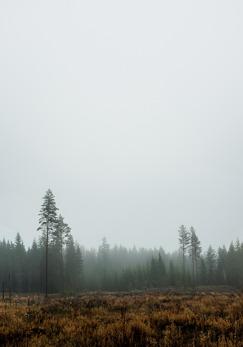 Skog - Poster