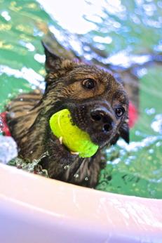 rehabilitering hund, simträning hund