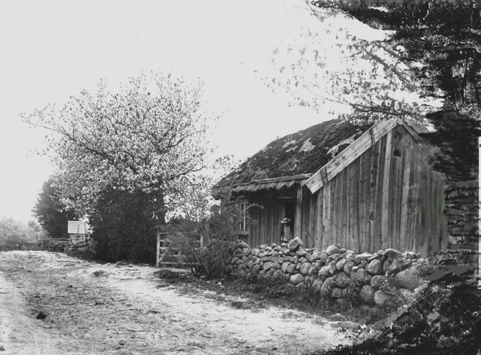 A. 22 (1) Soldatboställe Nr 331, Bäcktorp/Grufvesäter 1:4 i maj 1907. Bilden från 1907 på soldattorpet Nr 331 visar hästtransporttiden för vägen, som mer ser ut som en fägata, vilket den också var för djuren ner mot Fermabron och över till Sörberget på Billingen. Troligen dottern i huset som står i dörröppningen. I så fall Anna Cecilia Bäckström, född 1900 med sin bakom busken skymde far med hatt, Arvid Jonsson Bäckström, född 1869 som köpte huset 1905 och flyttade in med sin familj, dvs hustru och 7 barn! Huset revs 1918 då Bäckström byggde nytt hus. Nummertavlan som hörde till huset sålde då Bäckström till Olof Thunman, som då bodde på Engerås, för 3 kronor! Längst bak i fonden skymtar fattigstugan och till höger efter soldattorpet ligger Smedjebackens hus med gaveln mot vägen. Insatt av kent Friman, 2014-02-17. Läs mer på www.ljungstorpshistoria.se!