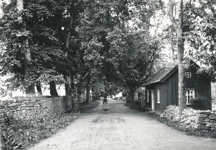 """B. 13 (2) """"TrumfaKarlssons"""" förhyrda stuga i Varnhem varifrån han flyttade till Kämpenstorp 1918. Han hyrde denna stuga som jordbruksarbetare för Trädgården mellan 1910 och 1918 under tiden de fem barnen med den 2:a hustrun föddes. Före honom har """"Ferma-Tilda"""" bott här med sina tre söner under 10 år efter makens och nämndemannen Anders Anderssons död 1889 i Pickagården. Den låg vid Kyrkoallén i Varnhem ett stycke in på höger sida (väster sida) nära Klosterdahl, som kom att bli Varnhems folkskola. Den uppfördes efter 1844 (då den inte finns med på laga skifteskartan). Fotograferad 1892 med de gamla träden fortfarande på plats - se bild ovan! Fotograf Ludvig Eriksson, Skövde. Insatt av Kent Friman, 2014-02-17. Läs mer på www.saj-banan.se!"""