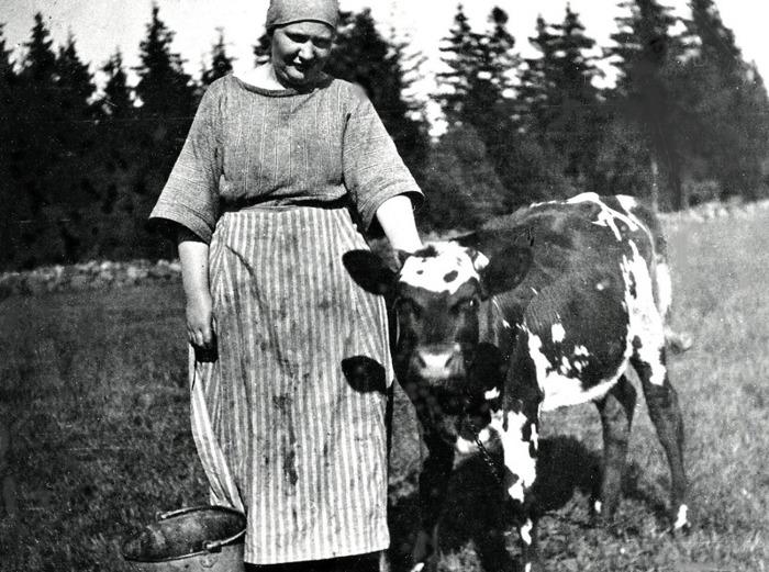 C. 4 (1) Lovisa Ullberg ser tilll en kalv i Sandbäcken, Ljungstorp 1920. Insatt av Kent Friman, 2014-02-26. Läs mer på www. ljungstorpshistoria.se!