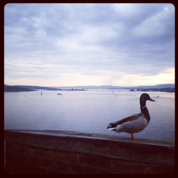 By the beautiful waterside of Oslo!
