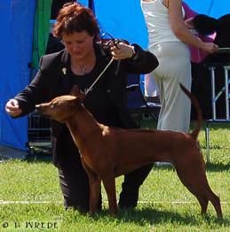 My love -Tuva, SweWinner 2005, FinWinner 2005 Swedish Champion, 2-best-bitch World Winner 2008 Khanbull's Ma Nee Däng