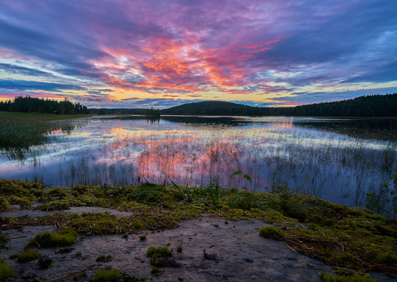 Ruotsalaiset mainitsivat Suomen kauniin luonnon useasti tuktimuksessa. Kuva: Tommi Saltiola / Unsplash.