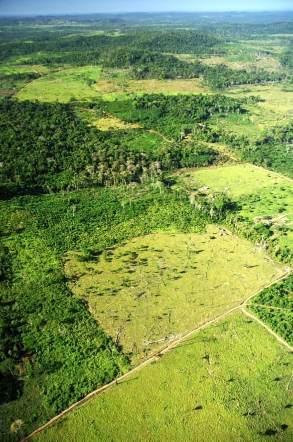 kövlat regnskogsområde Amazonas regnskog. Foto: Zig Koch/WWF
