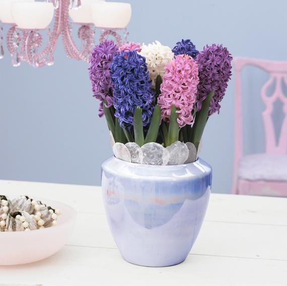 Foto: Blomsterfrämjandet och Katharina Brunat