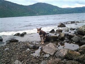 Nervös Ruffe i Lochness, sommaren 2012