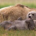 Hallo Bay-björnunge