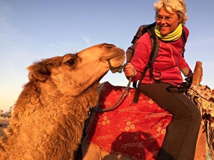 Det vi kallar kameler är i Marocko alltid dromedarer. Said har Essaouiras lugnaste. Ta en ridtur i solnedgången, marockoresan.se