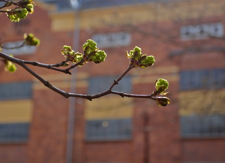 Utanför kraftstationen gjorde  våren framsteg.