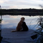 Långasjön hundar