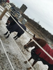 Hästar med utsikt mot NDS