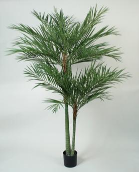 Areca Palm 240cm - 66-240 Areca Palm 240cm