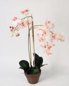Orchid Phalanopsis pink 75cm