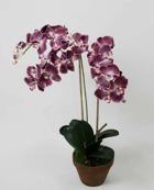 Orchid Phalanopsis Purple 75cm