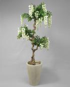 Vistera Orchide 170cm