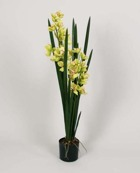 Orchid Green 110cm