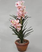 Orchid Wanda Pot 87cm