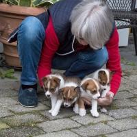 Alva, Anya, Aksel og Anton (fra venstre) 5 uker