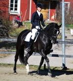 Amanda VesterinenArtell med Schwarovski