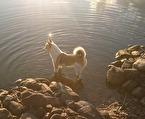 Zingo vågar bada .... lite :)