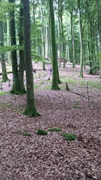 Naturreservat med bokskog :)
