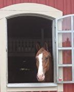 170812 På Arphus och hälsar på Anne-Carin Klinge med sina hästar :)