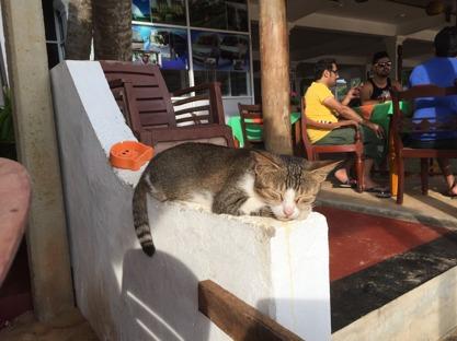 Även katten trivs på stranden!
