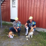 Kennel Swedpack med to hunder på svenske laget