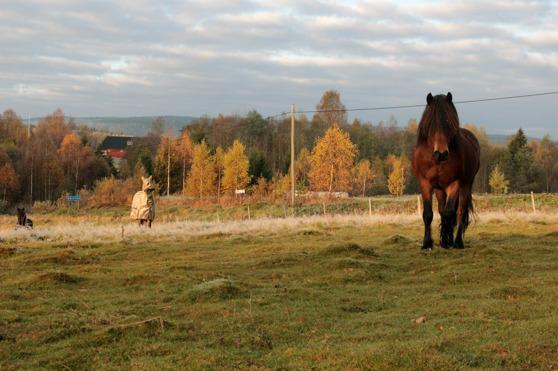 Hästarna blev nyfikna och kom fram och nosade, kameran var speciellt spännande.